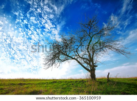 tree in a field on a dramatic blue sky