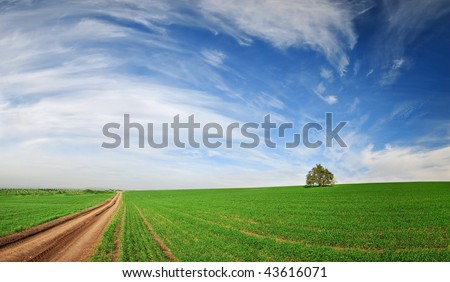 tree in a green field with path - stock photo