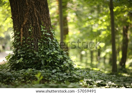 tree in a green forest witch very shallow depth of focus - stock photo