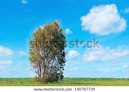 tree in a green meadow on a cloudy day