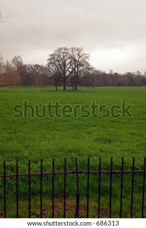 Tree in a landscape - stock photo