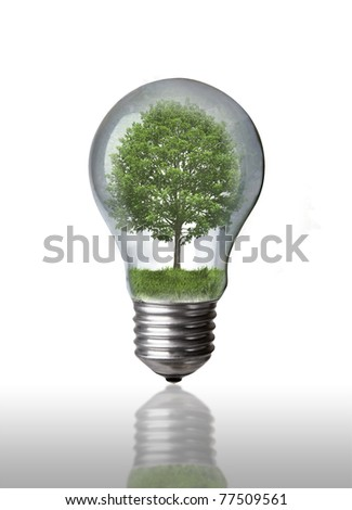 Tree in a light-bulb energy and environment concept - stock photo