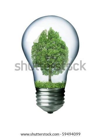 Tree in a light bulb isolated on white concept image - stock photo