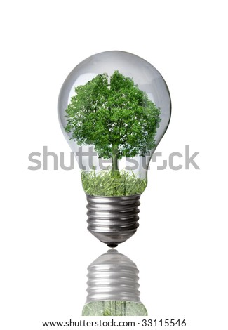 Tree in a light bulb isolated on white with clipping path - stock photo