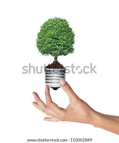 tree in a lightbulb in woman hand over white, green energy concept - stock photo