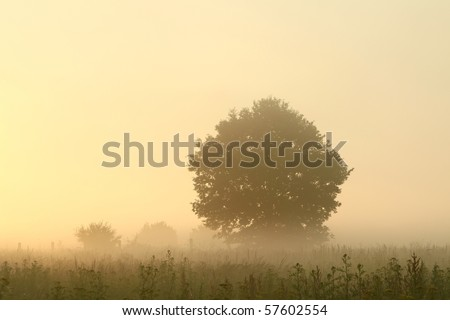 Tree in a meadow lit by the sunlight on a foggy summer morning. - stock photo