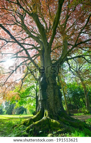 Tree in a park - stock photo
