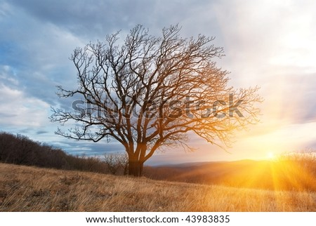 tree in a rays of sun