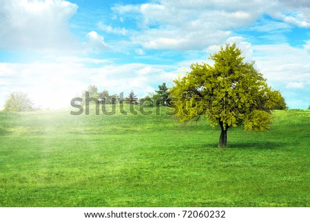 tree in a sunny meadow - stock photo