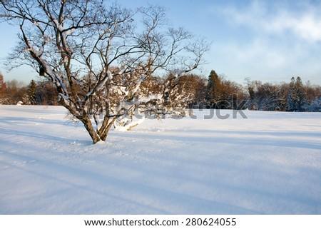 Tree in a winter snowy field. Winter landscape. Winter Wonderland. Winter background. - stock photo