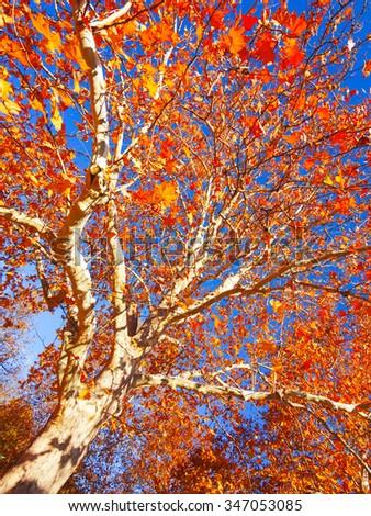 Tree in autumn - stock photo