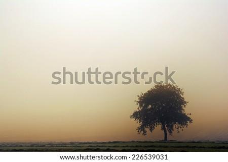 Tree in autumn morning fog - stock photo