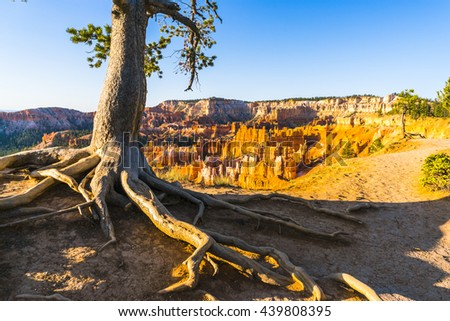 tree in Bryce canyon national park,when sunrise,Utah,usa. - stock photo