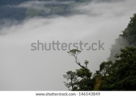 Tree in Cloud Forest of Ecuador with mist and mountains behind. - stock photo