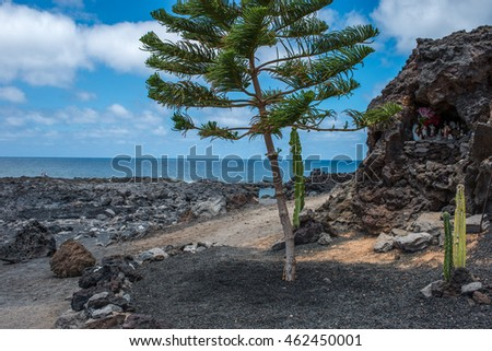 Tree in El Golfo, Lanzarote