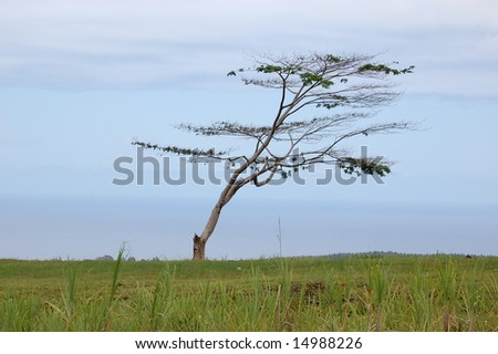 Tree in Field - stock photo