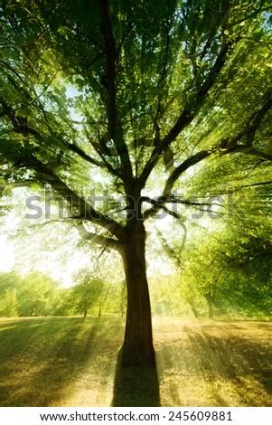 Tree in fog - stock photo