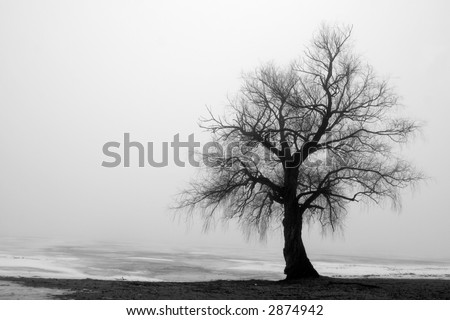 Tree in fog - stock photo