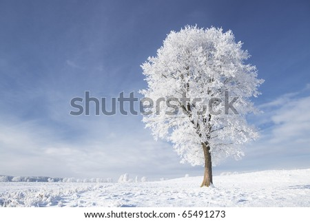 Tree in frost and landscape in snow against blue sky. Winter scene.