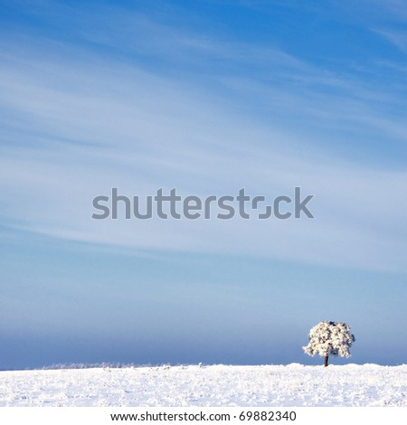 tree in frost and landscape in snow against blue sky. Winter scene - stock photo