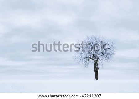 Tree in frost and snow against sky. Winter scene.