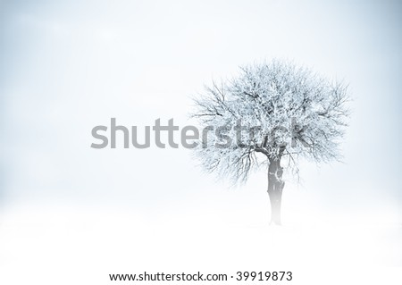 Tree in frost and snow and fog. Winter scene. - stock photo