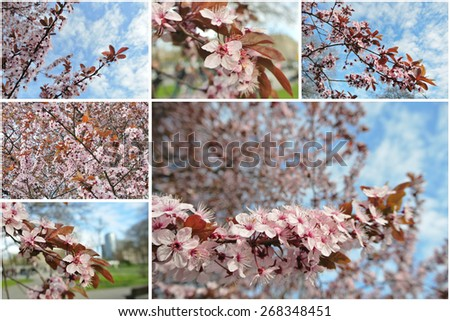 Tree in full blossom in early spring, on a sunny day. Photo collage. - stock photo