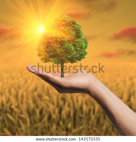 Tree in hand in the field - stock photo