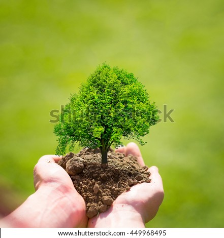 tree in hands, planting tree, eco nature concept - stock photo
