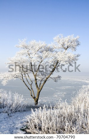 tree in hoarfrost on the coast of the sea