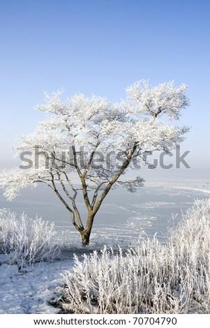 tree in hoarfrost on the coast of the sea - stock photo