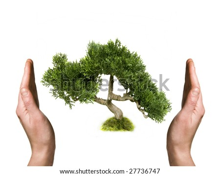 Tree in human hands - stock photo