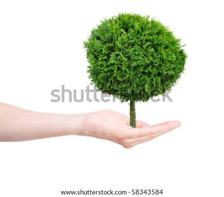 tree in human hands on light background - stock photo