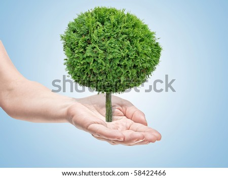 tree in human hands on light blue background - stock photo