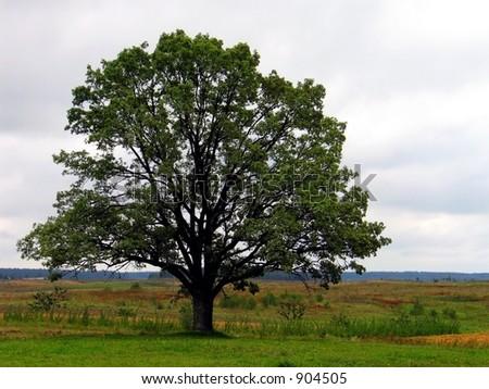 Tree in landscape - stock photo