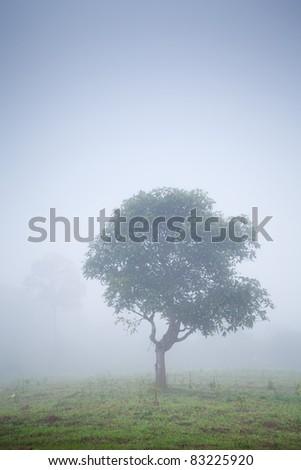 tree in morning haze - stock photo