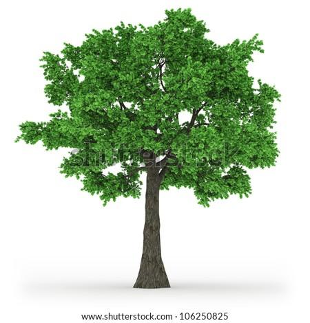 tree in 100Mpix - stock photo