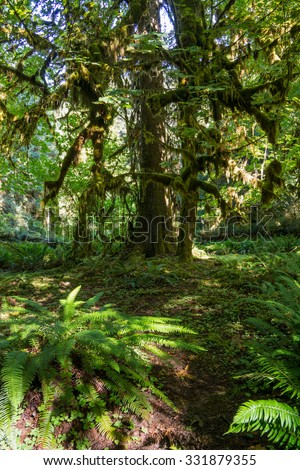 tree in Olympic national park