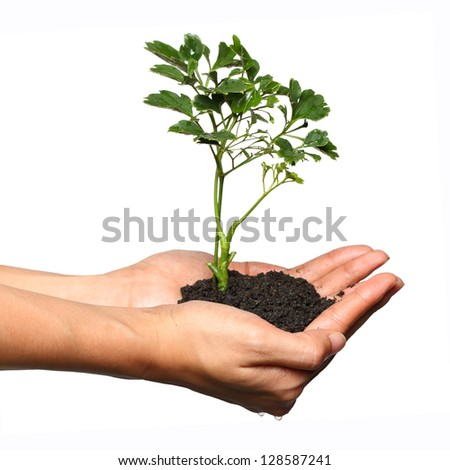 Tree in palm of hand isolated on white background
