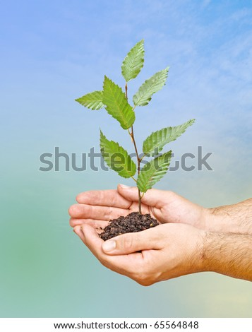tree in palms as a symbol of nature protection - stock photo