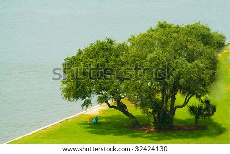 Tree in Park on the Beach - stock photo
