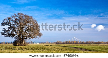 Tree in plowed field with Mt. Hood in the background viewed from Sauvie Island, Oregon, Oregon, U.S.A.