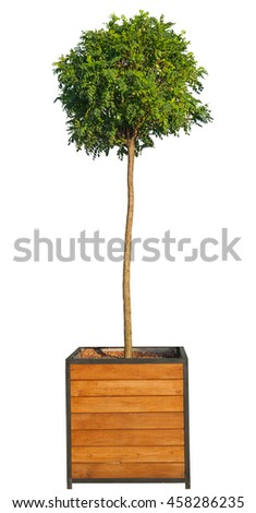 Tree in pot isolated on white - stock photo