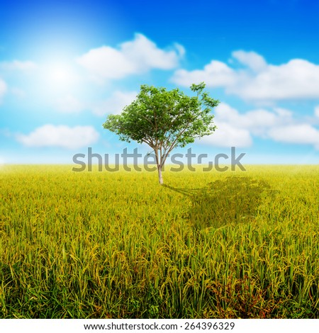 tree in rice green with sky - stock photo