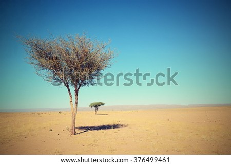 tree in Sahara desert in Morocco near Mhamid - stock photo