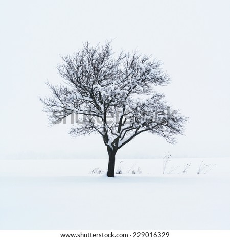 Tree in snow - stock photo