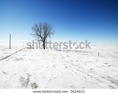 Tree in snow covered landscape with blue sky in background. - stock photo