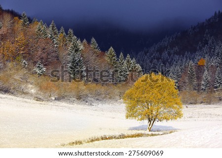 Tree in snow land. - stock photo