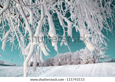 tree in snow on celestial background - stock photo