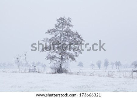 tree in snow on Dutch farmland during winter, Holland - stock photo